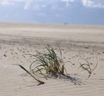 4 zand met gras 6 van 6