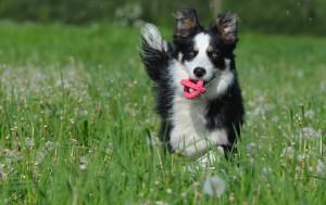 coaching met je eigen hond